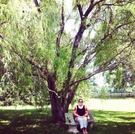 the help tree