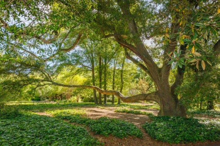 Hopelands-Gardens_A2X5093-768x512.jpg